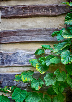 Log Cabin Vines
